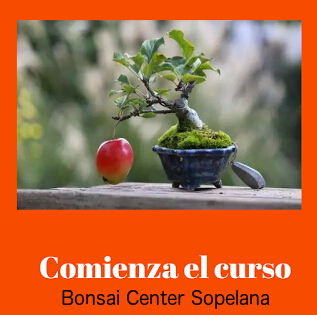 Bonsai Center para Bilbao